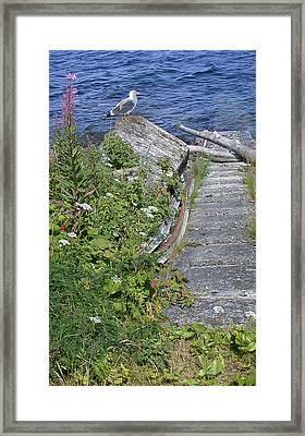 Seagull Steps Guard Island Alaska Framed Print by Bellesouth Studio