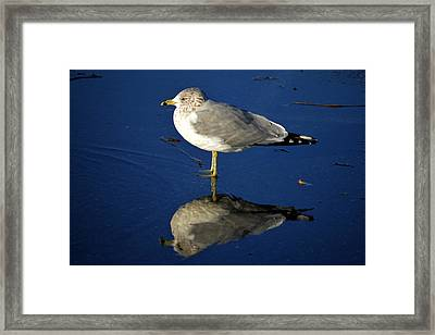 Seagull Reflecting In Shallow Water Framed Print by Bill Swartwout