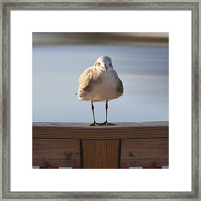 Seagull With An Attitude  Framed Print by Mike McGlothlen