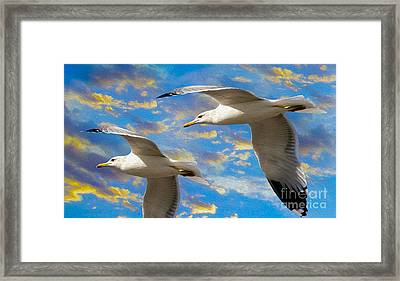 Seagulls In Flight Framed Print by Jon Neidert