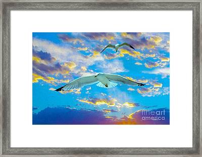 Seagulls  Framed Print by Jon Neidert