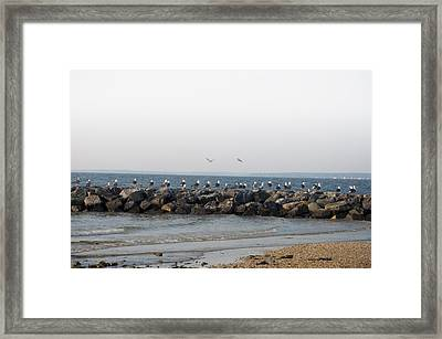 Seagulls On A Jetti Framed Print by Bill Cannon