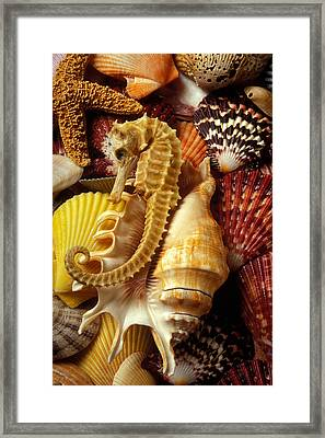 Seahorse Among Sea Shells Framed Print by Garry Gay