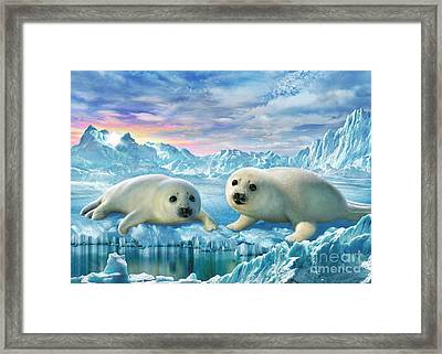 Seal Pups Framed Print by Adrian Chesterman