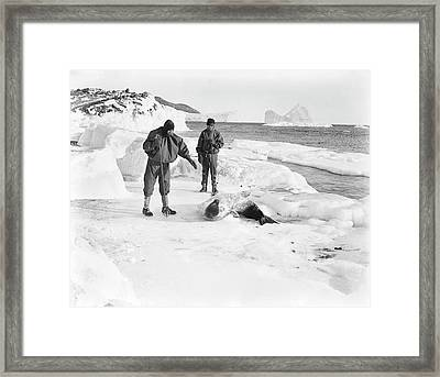 Seal Research In Antarctica Framed Print by Scott Polar Research Institute
