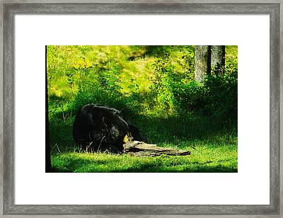Searching For That Last Termite Framed Print by Jeff Swan