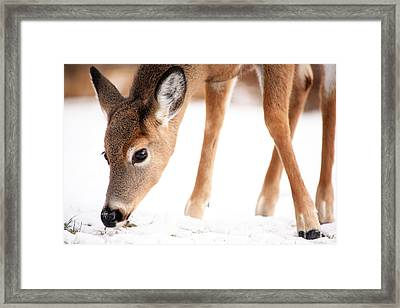 Searching Framed Print by Karol Livote