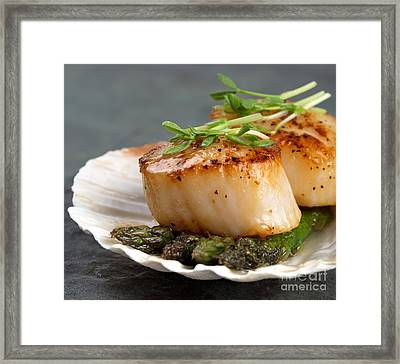 Seared Scallops Framed Print by Jane Rix