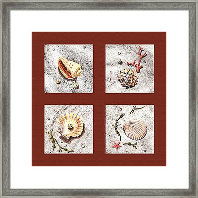 Seashell Collection Iv Framed Print by Irina Sztukowski