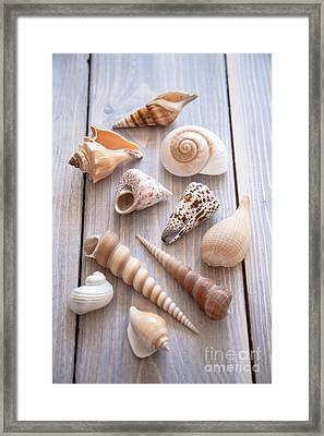 Seashell Collection Framed Print by Jan Bickerton