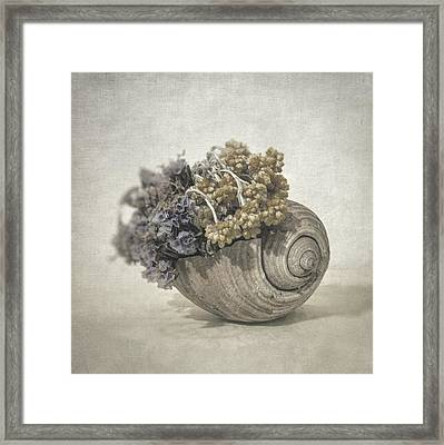 Seashell No.2 Framed Print by Taylan Soyturk