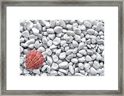 Seashell On White Pebbles Framed Print by Olivier Le Queinec