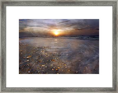 Seashell Sunrise Framed Print by Betsy C Knapp