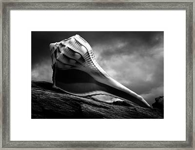 Seashell Without The Sea 3 Framed Print by Bob Orsillo