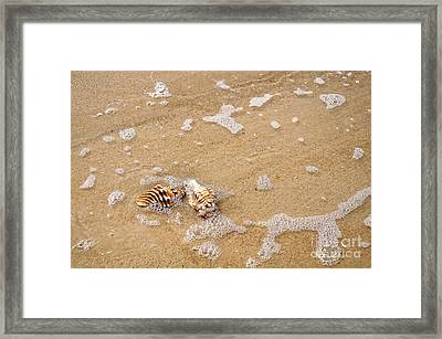 Seashells And Bubbles Framed Print by Kaye Menner