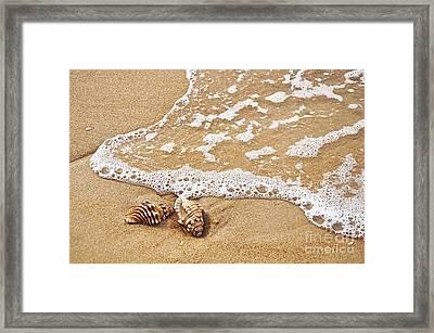 Seashells And Lace Framed Print by Kaye Menner