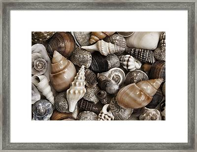Seashells On The Beach Framed Print by Carol Leigh