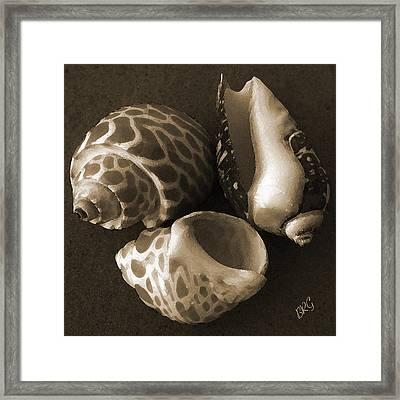 Seashells Spectacular No 1 Framed Print by Ben and Raisa Gertsberg