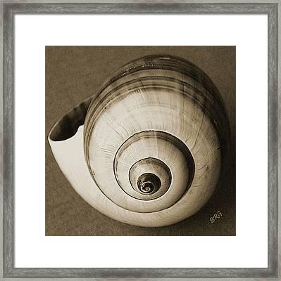 Seashells Spectacular No 25 Framed Print by Ben and Raisa Gertsberg