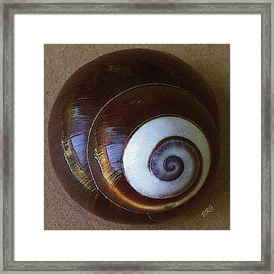 Seashells Spectacular No 26 Framed Print by Ben and Raisa Gertsberg