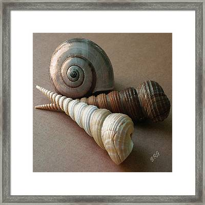 Seashells Spectacular No 29  Framed Print by Ben and Raisa Gertsberg