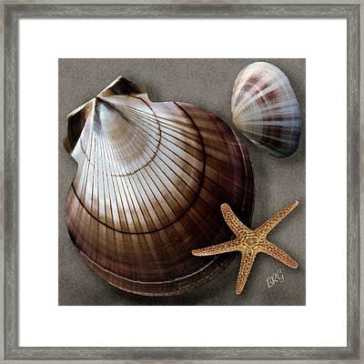 Seashells Spectacular No 38 Framed Print by Ben and Raisa Gertsberg