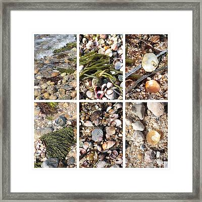 Seashore Collage Framed Print by Carol Groenen
