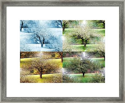 Seasonal Orchard Collage Framed Print by Shana Rowe Jackson