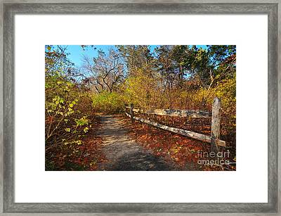 Seasons Change Framed Print by Catherine Reusch  Daley