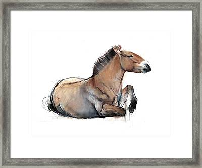 Seated Przewalski, 2011, Charcoal, Conté And Pastel On Paper Framed Print by Mark Adlington