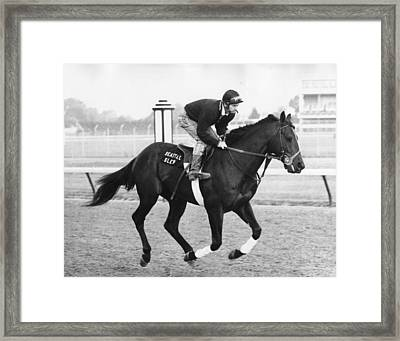 Seattle Slew Horse Racing #03 Framed Print by Retro Images Archive