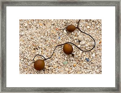 Seaweed And Sand - Jewels Of The Ocean Framed Print by Artist and Photographer Laura Wrede