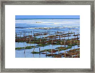 Seaweed Farm On Zanzibar Island Framed Print by Aidan Moran