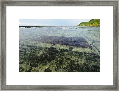 Seaweed Farming, Bali Framed Print by Science Photo Library