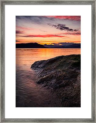 Seaweed Sunset Framed Print by Alexis Birkill