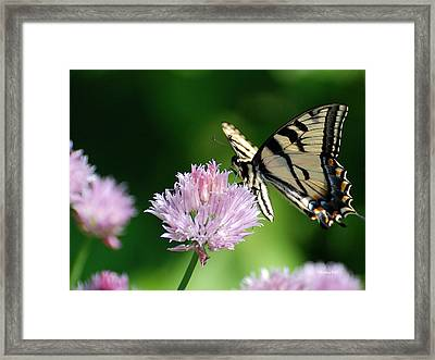 Second Nature Butterfly Framed Print by Christina Rollo