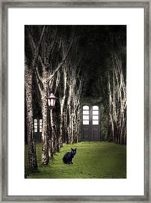 Secret Forest Dwelling Framed Print by Nirdesha Munasinghe