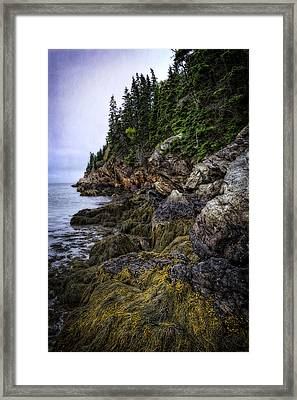 Secret Hideaway Framed Print by Joan Carroll