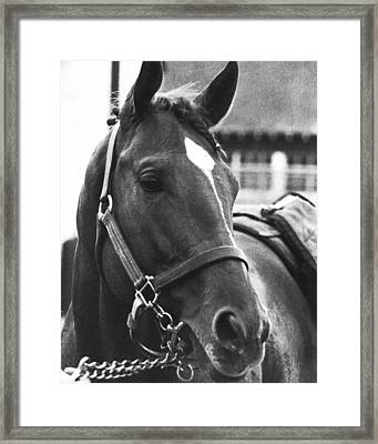 Secretariat Vintage Horse Racing #02 Framed Print by Retro Images Archive