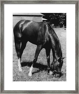 Secretariat Vintage Horse Racing #03 Framed Print by Retro Images Archive