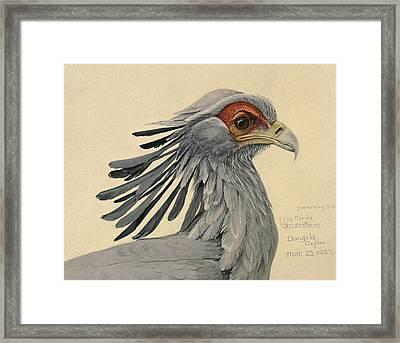 Secretary Bird Framed Print by Louis Agassiz Fuertes