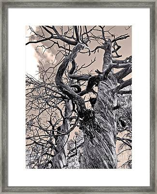 Sedona Arizona Ghost Tree In Black And White Framed Print by Gregory Dyer