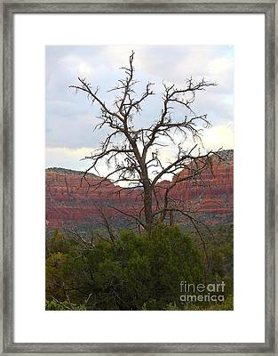 Sedona Tree Framed Print by Carol Groenen
