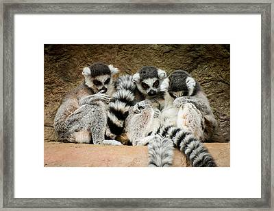 See No Evil... Framed Print by Mirra Photography
