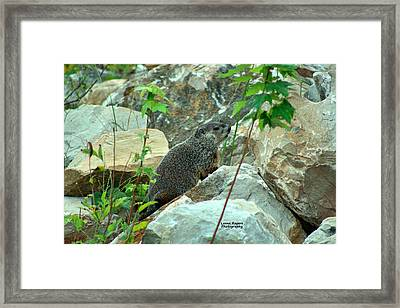 See Rock City Framed Print by Lorna Rogers Photography
