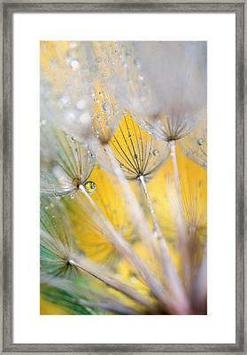 Seedhead With Raindrops Framed Print by Jaynes Gallery