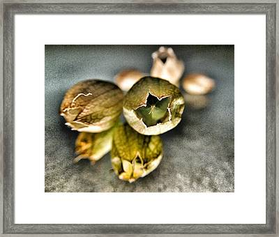 Seeds  Framed Print by Marianna Mills