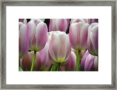 Seeing Pink Framed Print by Penny Lisowski