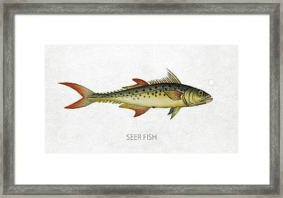 Seer Fish Framed Print by Aged Pixel