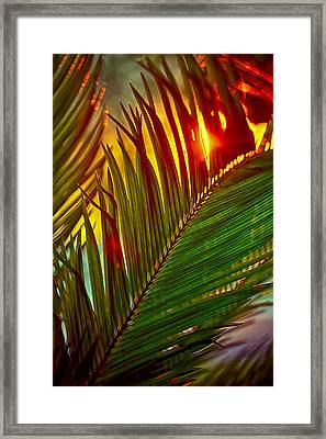 Sego Frond Fire Framed Print by Scott Campbell